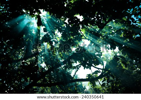 the sun's rays passing through the pear and lighting plot. tinted - stock photo