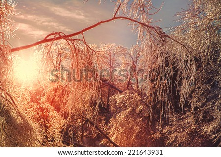 The sun shines brightly illuminating the ice covered branches of a tree making them sparkle after an ice storm during the winter season.  Filtered for a retro, vintage look.  - stock photo