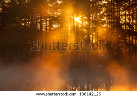 The sun shines through the forest at a misty morning - stock photo