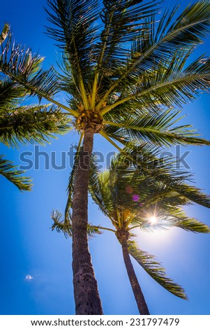 The sun shining through palm trees in Palm Beach, Florida. - stock photo