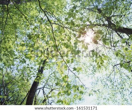 The sun shining through the tree branches. - stock photo