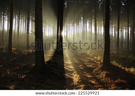 The sun shining through the trees of a forest. - stock photo