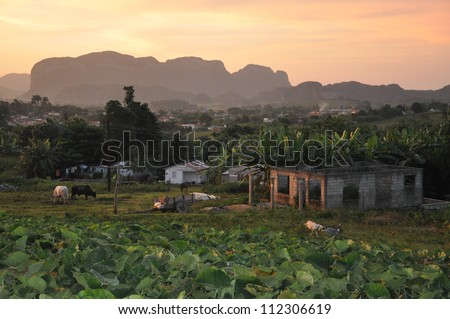 The sun starts to set over a rural scene with live stock and houses in Vinales, Cuba - stock photo