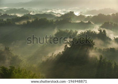 The sunlight bouncing off the mist and fog at the top of trees. - stock photo