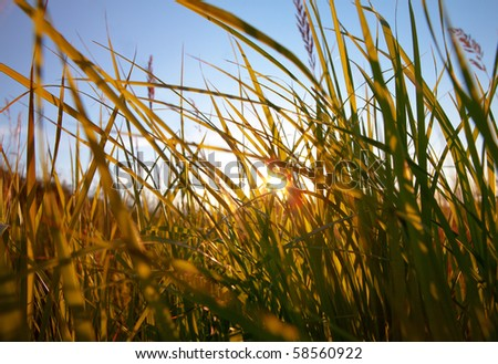The sunlight makes the way through a grass - stock photo