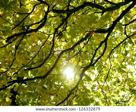 The sunlight shining through a leafy treetop. - stock photo