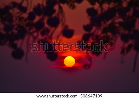 The sunset with Pink Trumpet Tree silhouetted against the sky