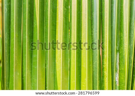 The surface of coconut leaves.