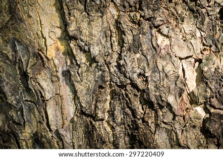 The surface texture of wood background.