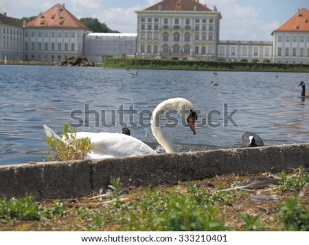 The swan and duck swimming in the palace garden pool leisurely