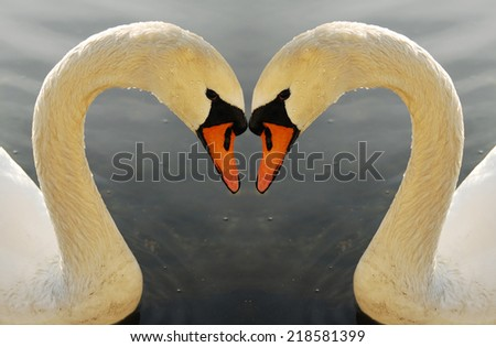 The swans - symbol of grace. Two swans one heart. Love, beauty and elegance concept. Two swans on Geneva lake, Switzerland - stock photo
