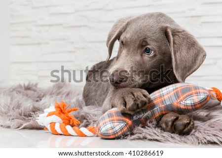 the sweetest puppies - stock photo