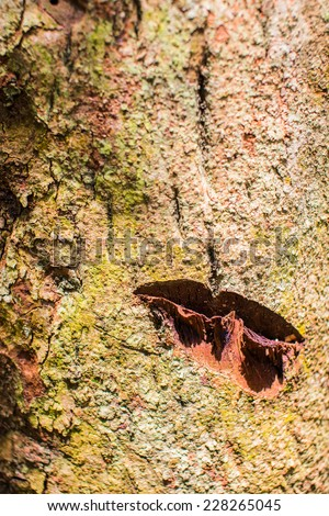 The symbol carved on the bark. - stock photo