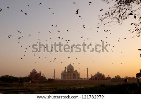 The Taj Mahal, India - stock photo