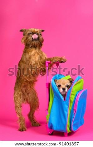 The taste of travelling concept - dogs with suitcase - stock photo