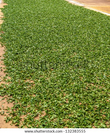 The tea leaves are dried - stock photo