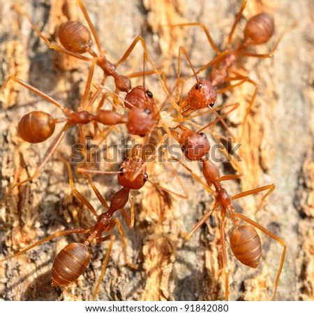 the team work of ants - stock photo