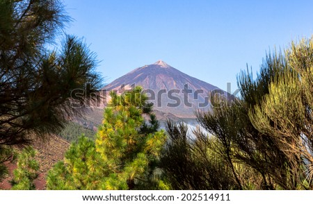 The Teide volcano behind trees in Tenerife, Spain. - stock photo