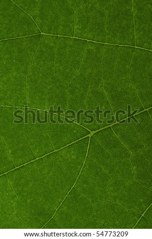 the texture of green leaf - stock photo