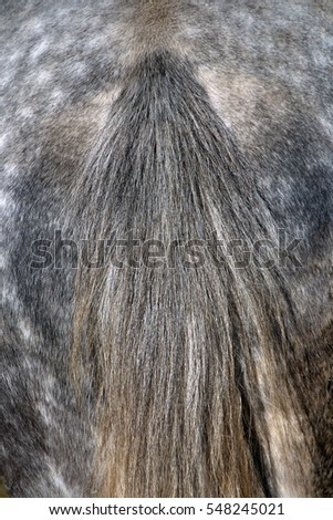 The texture of the tail of a horse of gray
