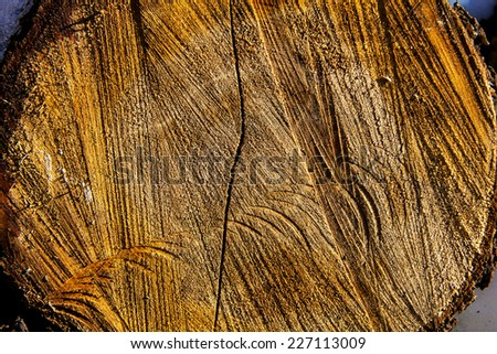 the texture of the wood cut - stock photo
