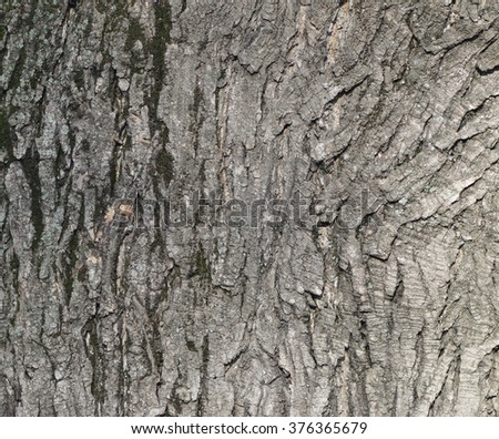 The texture of tree bark