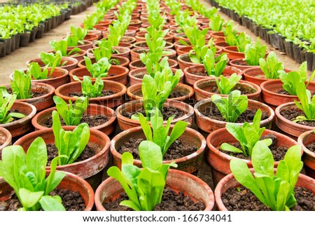 the theme of the nursery garden-- vegetable - stock photo
