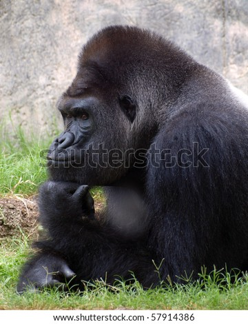 The Thinker - stock photo