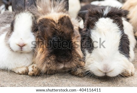The three of cute rabbits relaxing on the Large rocks