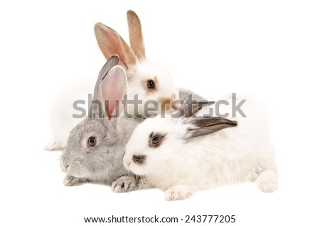 The three rabbits isolated on a white background - stock photo