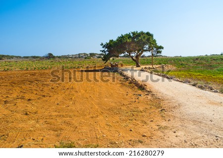 The tiny benches under the large tree in the middle of the field is the paradise for those travelers who wants to relax in shade, Cape Greco, Cyprus. - stock photo