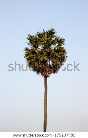 The top of palm tree in clear sky. - stock photo