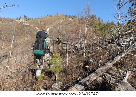 The tourist with a backpack and a support going to mountain top through a dead wood - stock photo