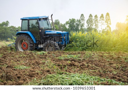 The tractor is plowing and tiller the Sunn Hemp to make a fresh compost to the soil in the field