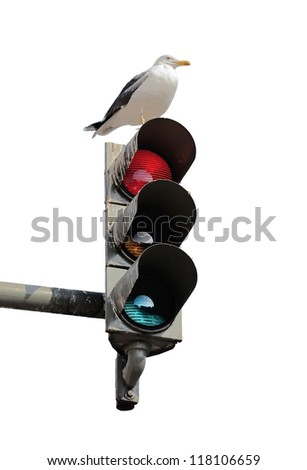 The traffic light and resting on him the bird isolated on white background - Lisbon, Portugal - stock photo