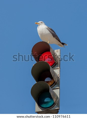 The traffic light and resting on him the bird on in front of blue sky - Lisbon, Portugal - stock photo