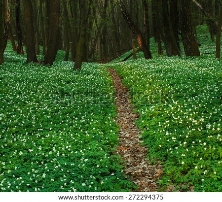 The trail in the blossoming green forest, spring nature background