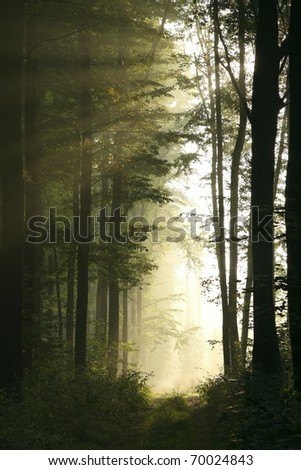 The trail in the majestic deciduous forest on a foggy September morning. - stock photo