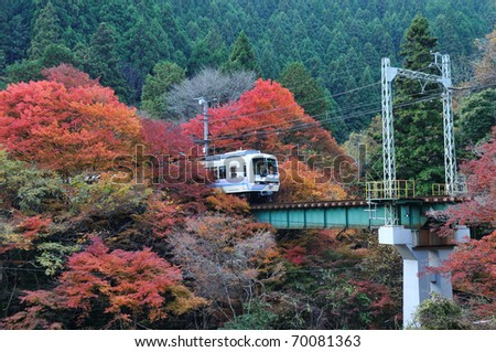 The train running in the colorful maple tree. - stock photo
