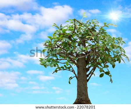 The tree against summer sky - stock photo