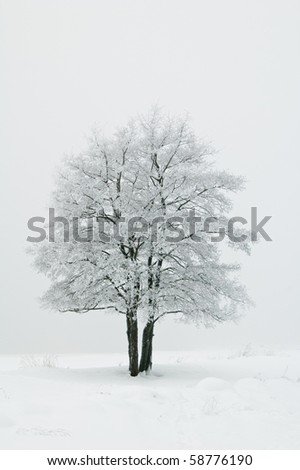 The tree covered with hoarfrost in a fog - stock photo
