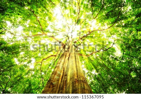 The tree from the root to the top. - stock photo
