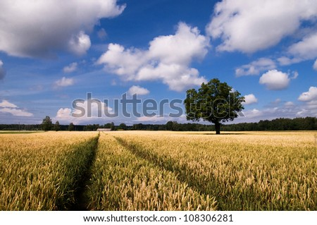The tree in the rye field - stock photo