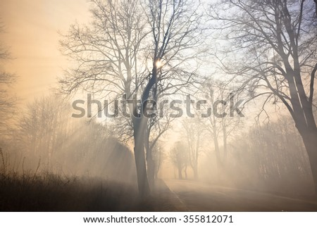The trees along the road in the smoke