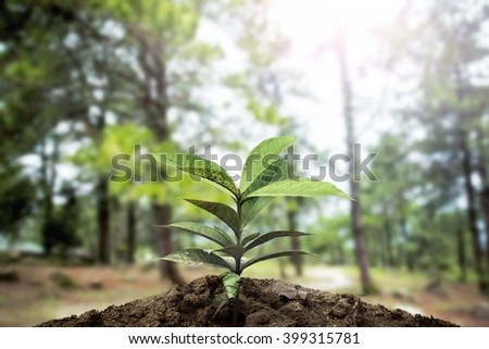 The trees are sprouting from the ground behind a tree. - stock photo