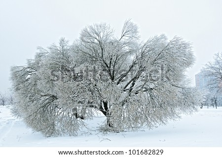 The trees covered with ice, after a winter rain - stock photo