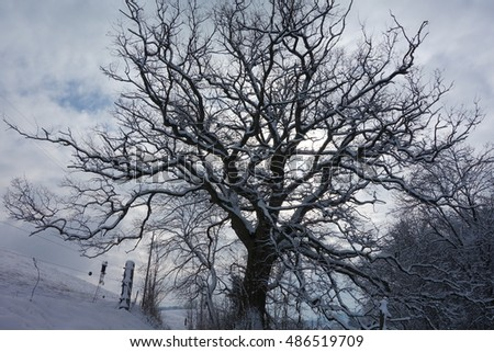 The trees in winter with white snow