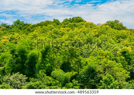 the tropical green forest and cloudy sky day time.