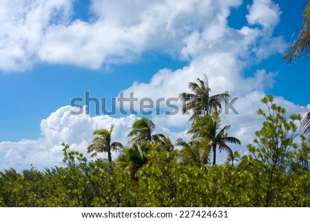The tropical island with palm trees