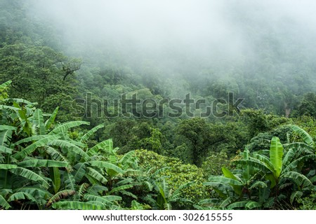 The tropical rain forest on rainy in the morning. - stock photo